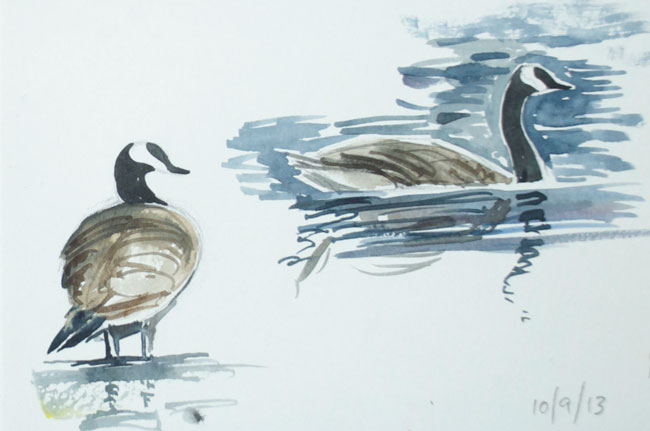 Wild Geese Drawing Canada-geese1 Canada-geese2