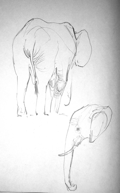 Elephants8-web