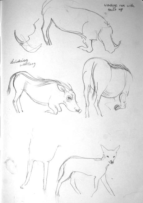 Warthogs1