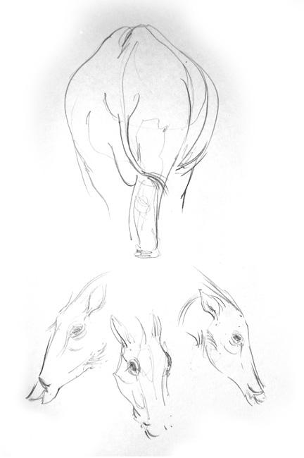 Warthogs2