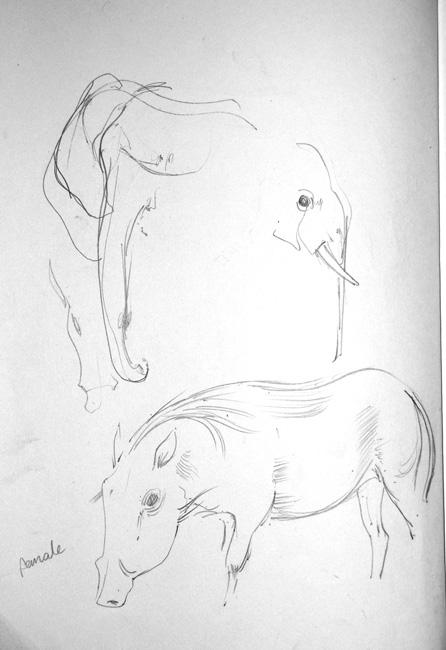 Warthogs3