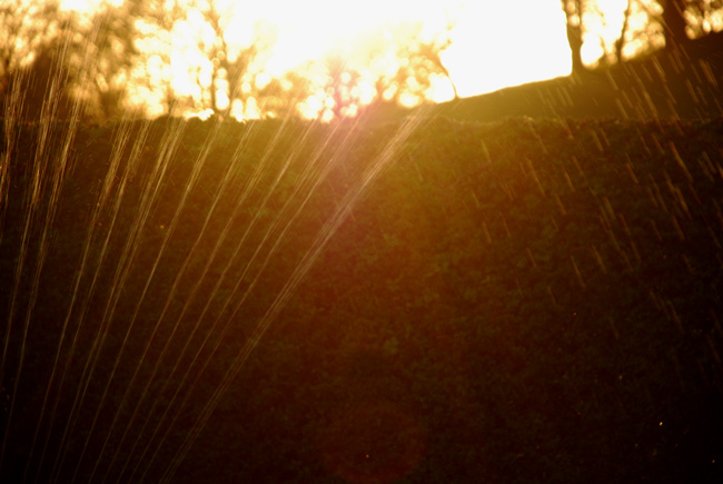 sprinkler5-web