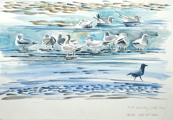 7.-Common-gulls-&-crow