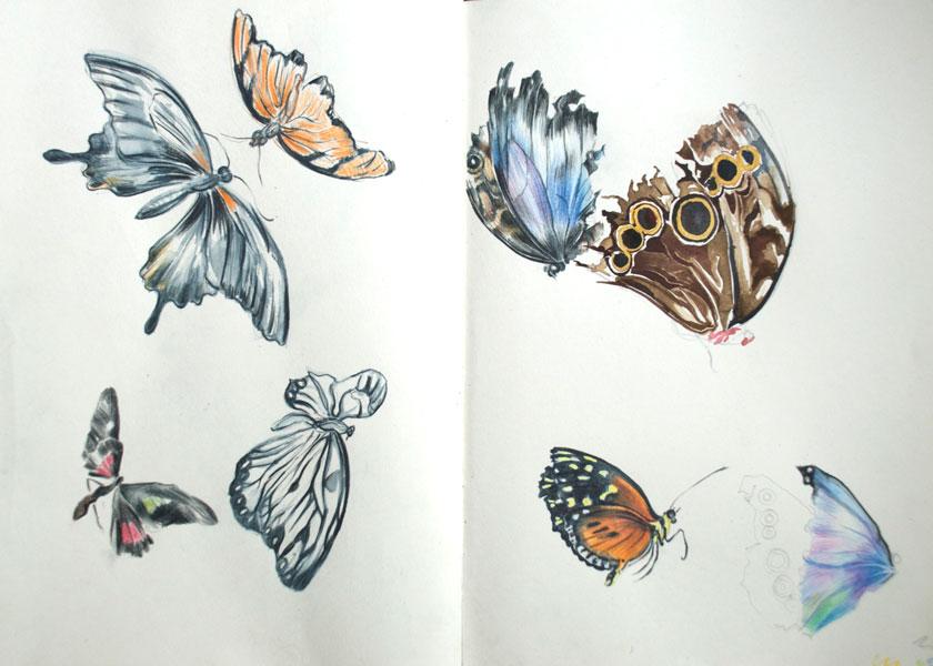 Flutterbys-web