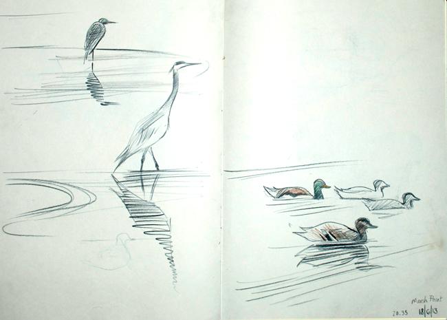 heron&ducks
