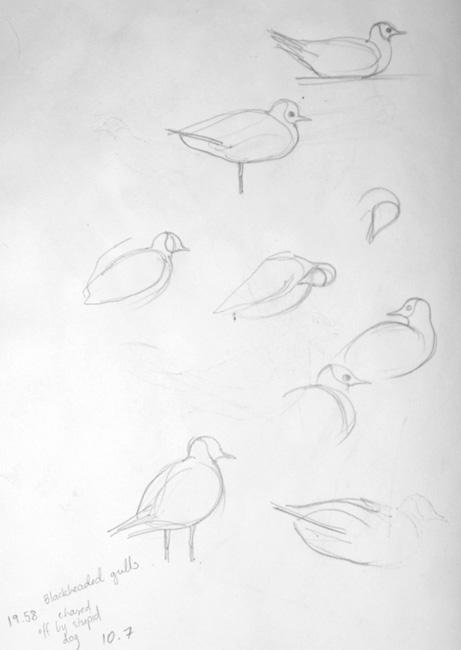 gulls-sketch