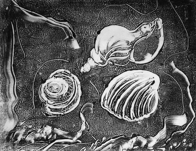 Ann-shells-monotype-web