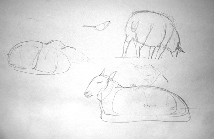 Sketch of sheep