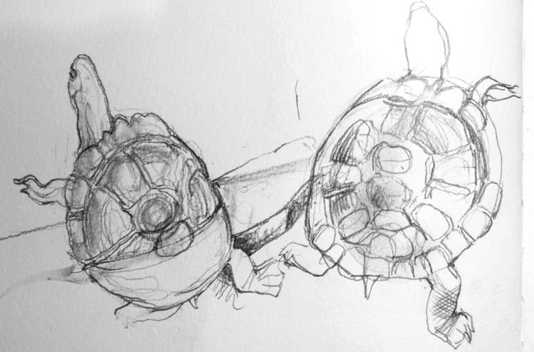 Pencil sketch of terrapins