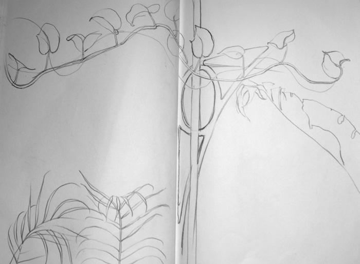 Creeper, Butterfly House, pencil