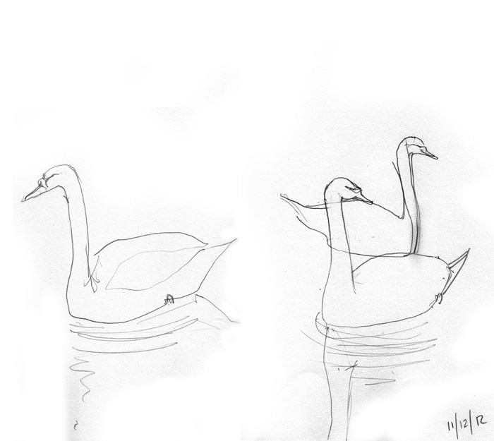Swans, pencil sketch