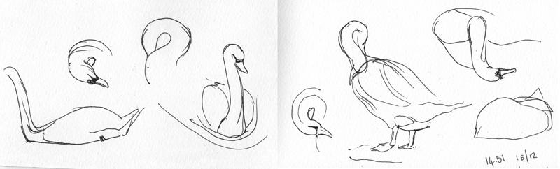 Swans, ink sketch