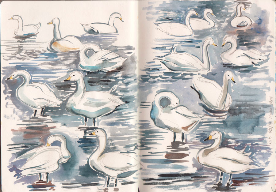 Whooper Swans, Martin Mere WWT, watercolour