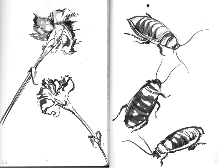 Cockroaches & Carnations, ink sketch