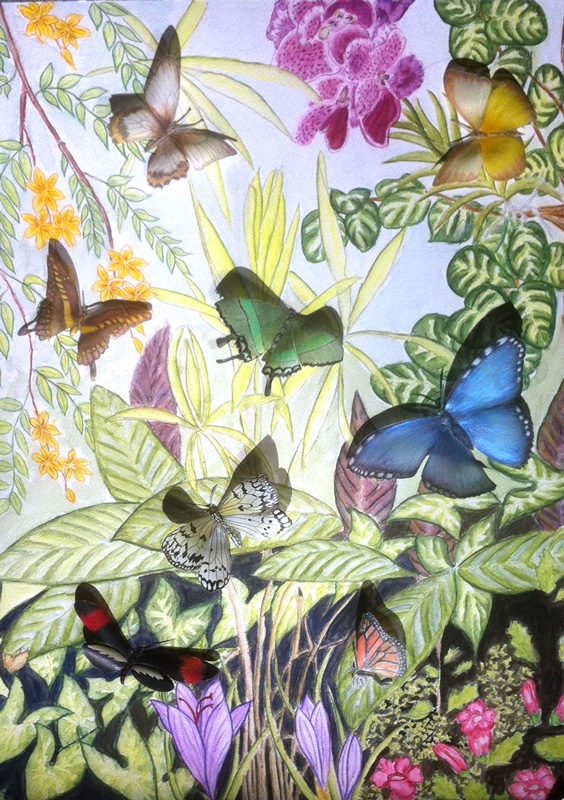 Kathryn-Dix--Butterflies